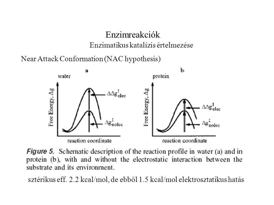 Enzimreakciók Enzimatikus katalízis értelmezése Near Attack Conformation (NAC hypothesis) sztérikus eff.