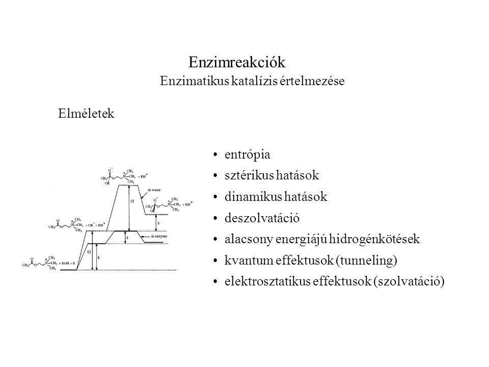 Enzimreakciók Enzimatikus katalízis értelmezése entrópia sztérikus hatások dinamikus hatások deszolvatáció alacsony energiájú hidrogénkötések kvantum effektusok (tunneling) elektrosztatikus effektusok (szolvatáció) Elméletek