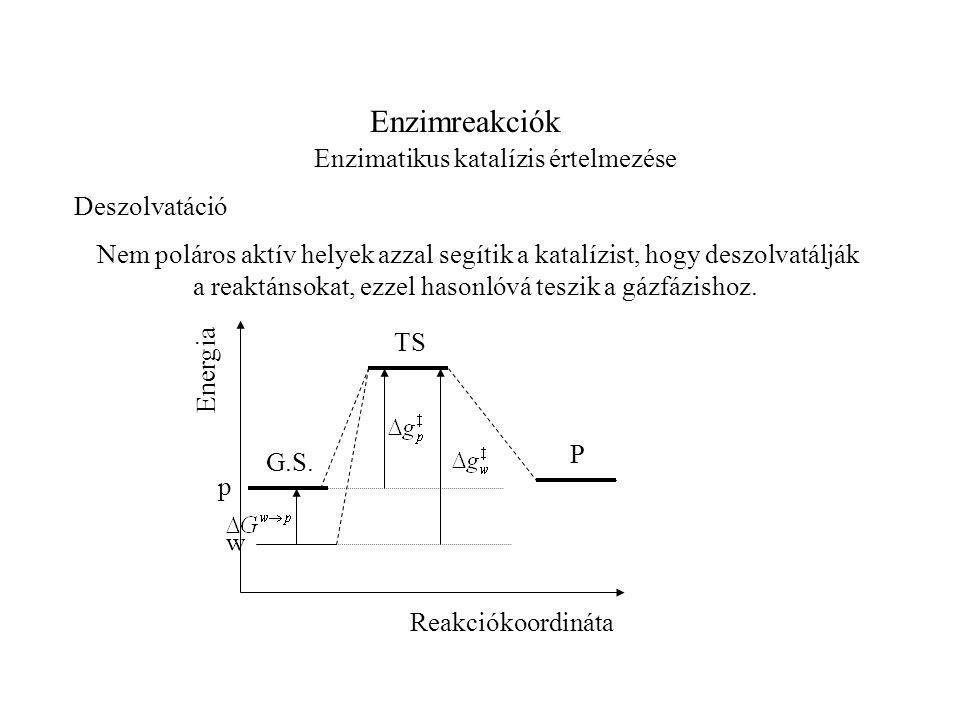Enzimreakciók Enzimatikus katalízis értelmezése Deszolvatáció Nem poláros aktív helyek azzal segítik a katalízist, hogy deszolvatálják a reaktánsokat, ezzel hasonlóvá teszik a gázfázishoz.
