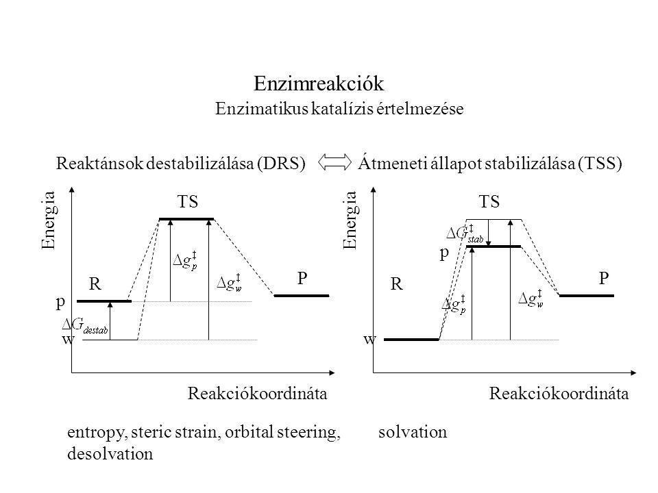 Enzimreakciók Enzimatikus katalízis értelmezése Reaktánsok destabilizálása (DRS) TS R P Reakciókoordináta Energia w p Átmeneti állapot stabilizálása (TSS) TS R P Reakciókoordináta Energia w p entropy, steric strain, orbital steering, desolvation solvation