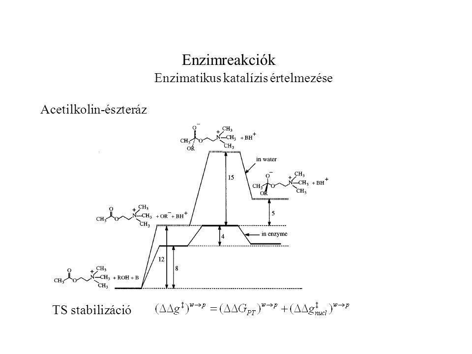 Enzimreakciók Enzimatikus katalízis értelmezése Acetilkolin-észteráz TS stabilizáció