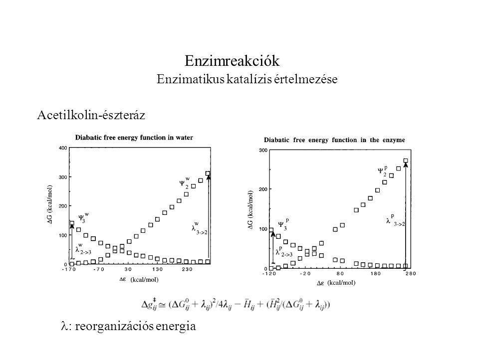 Enzimreakciók Enzimatikus katalízis értelmezése : reorganizációs energia Acetilkolin-észteráz