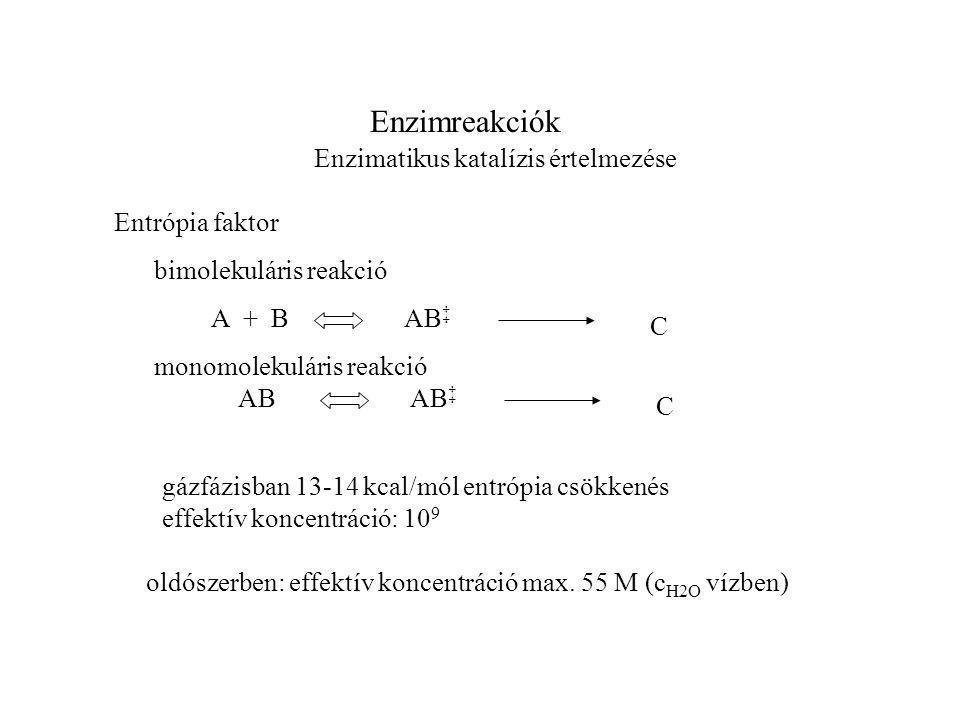 Enzimreakciók Enzimatikus katalízis értelmezése Entrópia faktor AB C AB ‡ A + B C AB ‡ bimolekuláris reakció monomolekuláris reakció gázfázisban 13-14 kcal/mól entrópia csökkenés effektív koncentráció: 10 9 oldószerben: effektív koncentráció max.