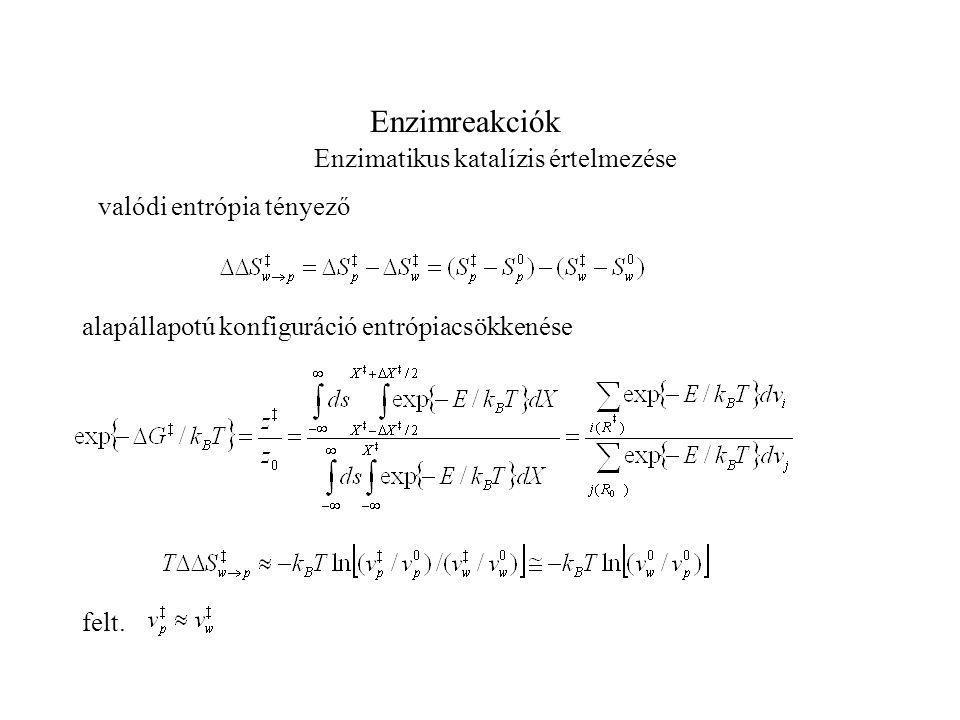 Enzimreakciók Enzimatikus katalízis értelmezése valódi entrópia tényező alapállapotú konfiguráció entrópiacsökkenése felt.