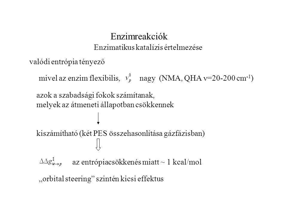 """Enzimreakciók Enzimatikus katalízis értelmezése valódi entrópia tényező mivel az enzim flexibilis, nagy (NMA, QHA =20-200 cm -1 ) azok a szabadsági fokok számítanak, melyek az átmeneti állapotban csökkennek kiszámítható (két PES összehasonlítása gázfázisban) az entrópiacsökkenés miatt ~ 1 kcal/mol """"orbital steering szintén kicsi effektus"""