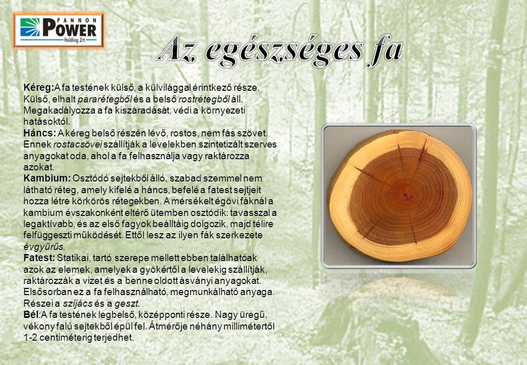 Kéreg:A fa testének külső, a külvilággal érintkező része. Külső, elhalt pararétegből és a belső rostrétegből áll. Megakadályozza a fa kiszáradását, vé