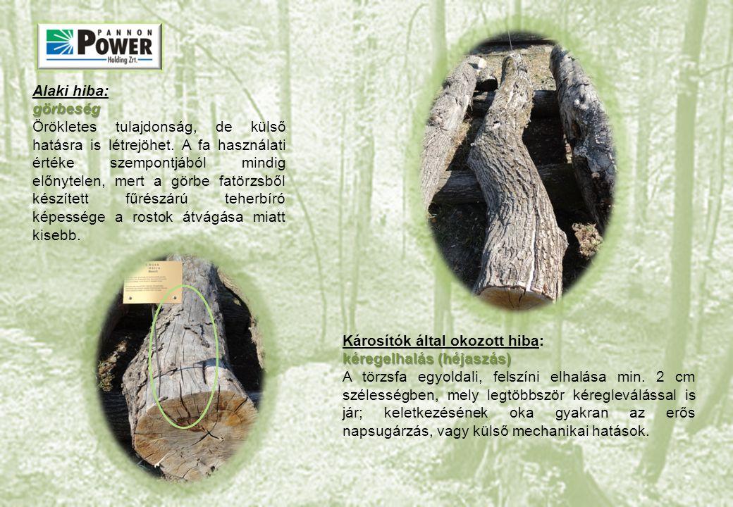 Alaki hiba:görbeség Örökletes tulajdonság, de külső hatásra is létrejöhet. A fa használati értéke szempontjából mindig előnytelen, mert a görbe fatörz