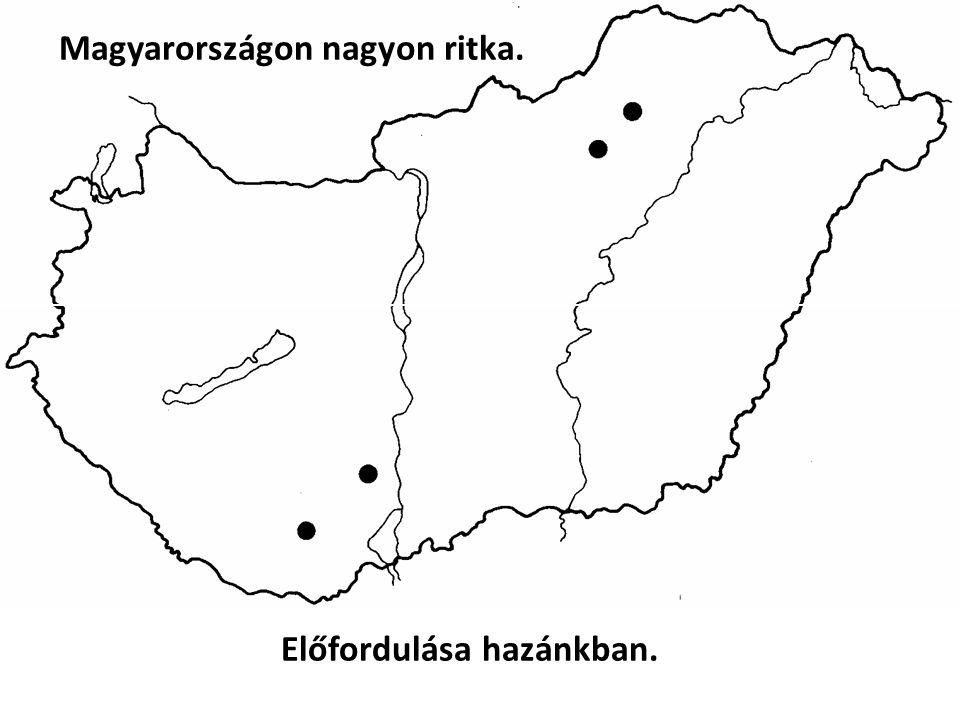 Magyarországon nagyon ritka. Előfordulása hazánkban.