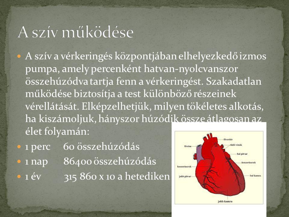 A szív a vérkeringés központjában elhelyezkedő izmos pumpa, amely percenként hatvan-nyolcvanszor összehúzódva tartja fenn a vérkeringést. Szakadatlan