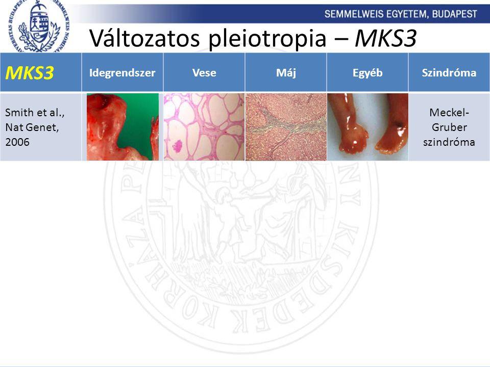 Változatos pleiotropia – MKS3 MKS3 IdegrendszerVeseMájEgyébSzindróma Smith et al., Nat Genet, 2006 Meckel- Gruber szindróma