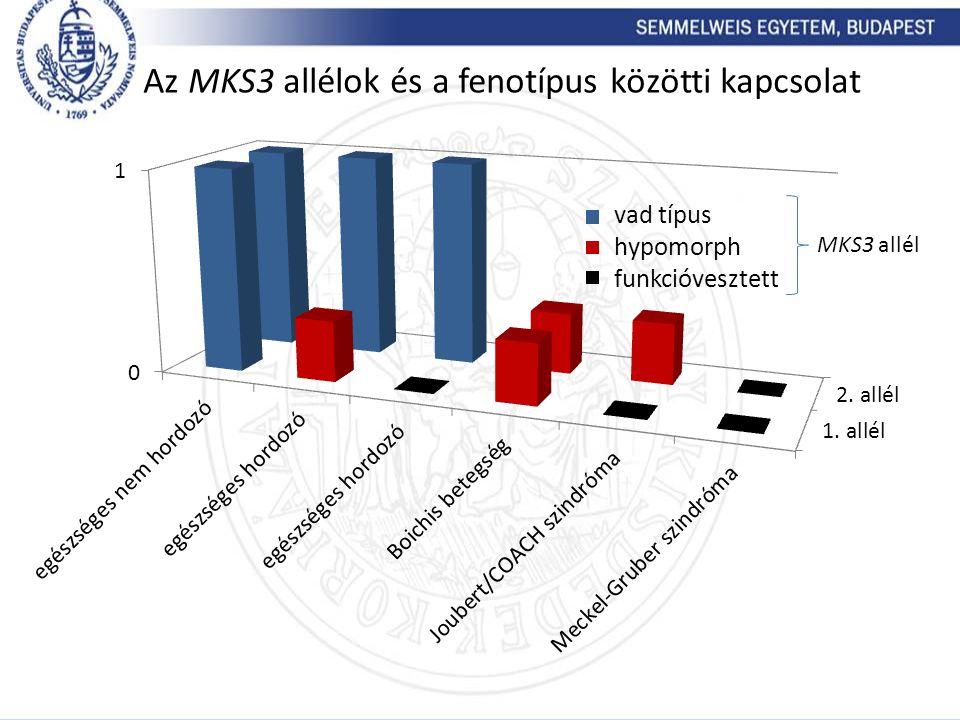 Az MKS3 allélok és a fenotípus közötti kapcsolat vad típus hypomorph funkcióvesztett MKS3 allél