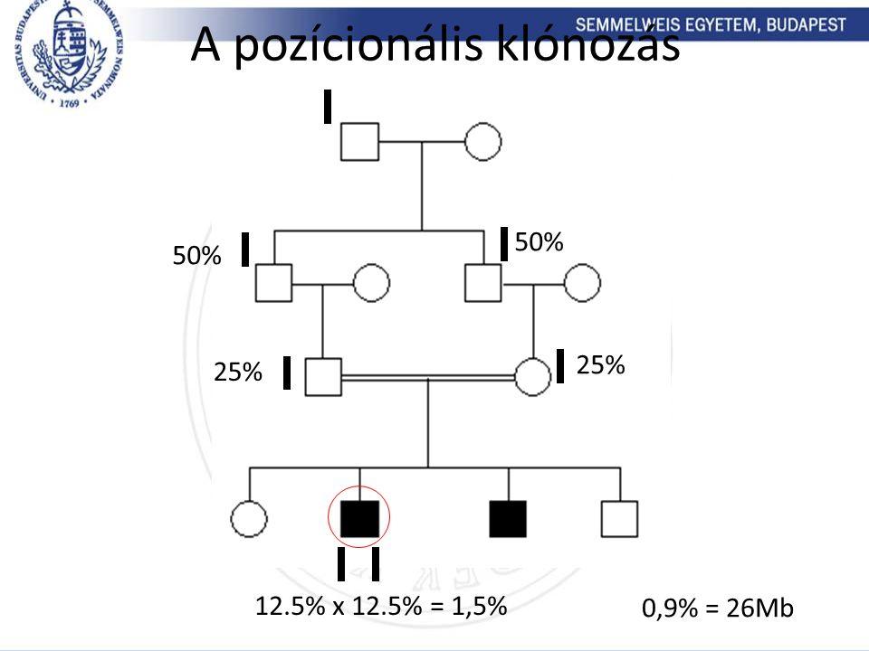 50% 25% 50% 25% 12.5% x 12.5% = 1,5% A pozícionális klónozás 0,9% = 26Mb
