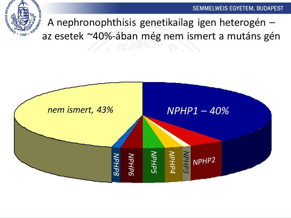 A nephronophthisis genetikailag igen heterogén – az esetek ~40%-ában még nem ismert a mutáns gén NPHP8 NPHP5 NPHP6 NPHP4 NPHP3 NPHP1 – 40% NPHP2 nem i