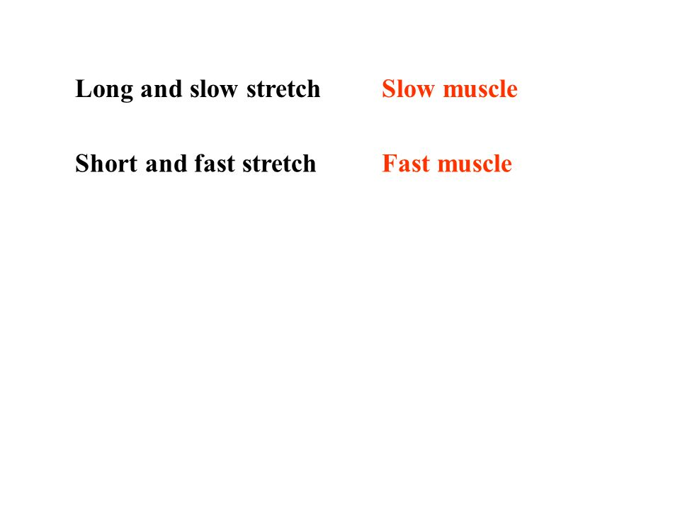 Mechanical work Muscle tension 1.0M 0 at which the knee extension or muscle stretch started Muscle tension 0.5M 0 at which the knee extension or muscl