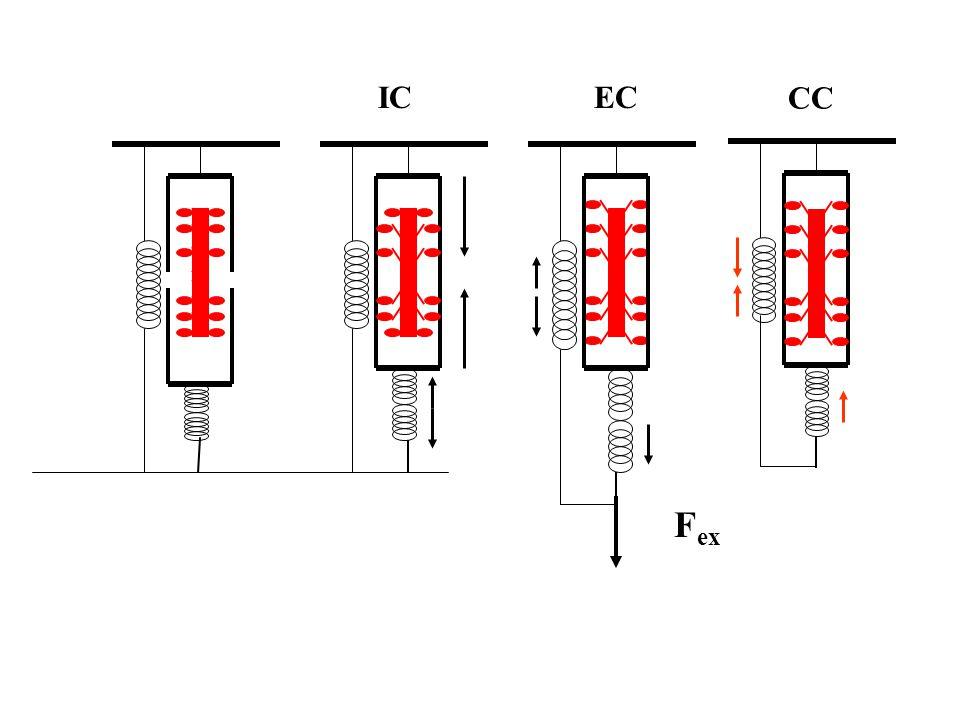 Különbség a CMJ és SJ típusú felugrások eredménye között az életkor függvényében Elasztikus energia felhasználás Az ízületi hajlítás mértékének hatása