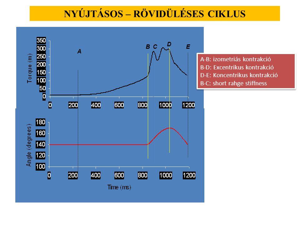 NYÚJTÁSOS – RÖVIDÜLÉSES CIKLUS BC D E A A-B: izometriás kontrakció B-D: Excentrikus kontrakció D-E: Koncentrikus kontrakció B-C: short rahge stiffness A-B: izometriás kontrakció B-D: Excentrikus kontrakció D-E: Koncentrikus kontrakció B-C: short rahge stiffness