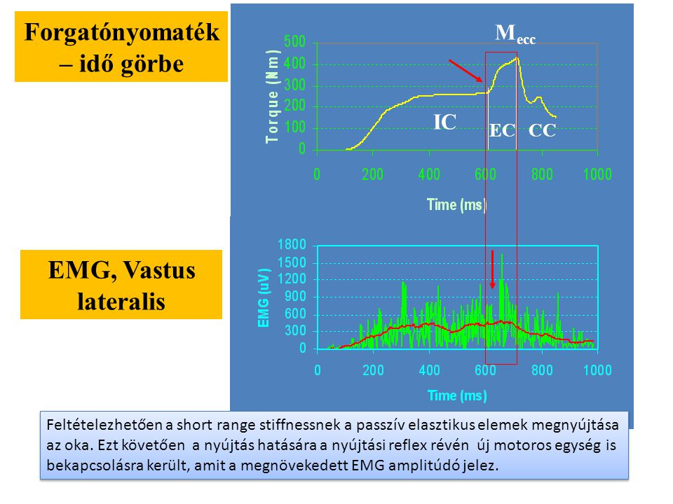 NYÚJTÁSOS – RÖVIDÜLÉSES CIKLUS BC D E A A-B: izometriás kontrakció B-D: Excentrikus kontrakció D-E: Koncentrikus kontrakció B-C: short rahge stiffness