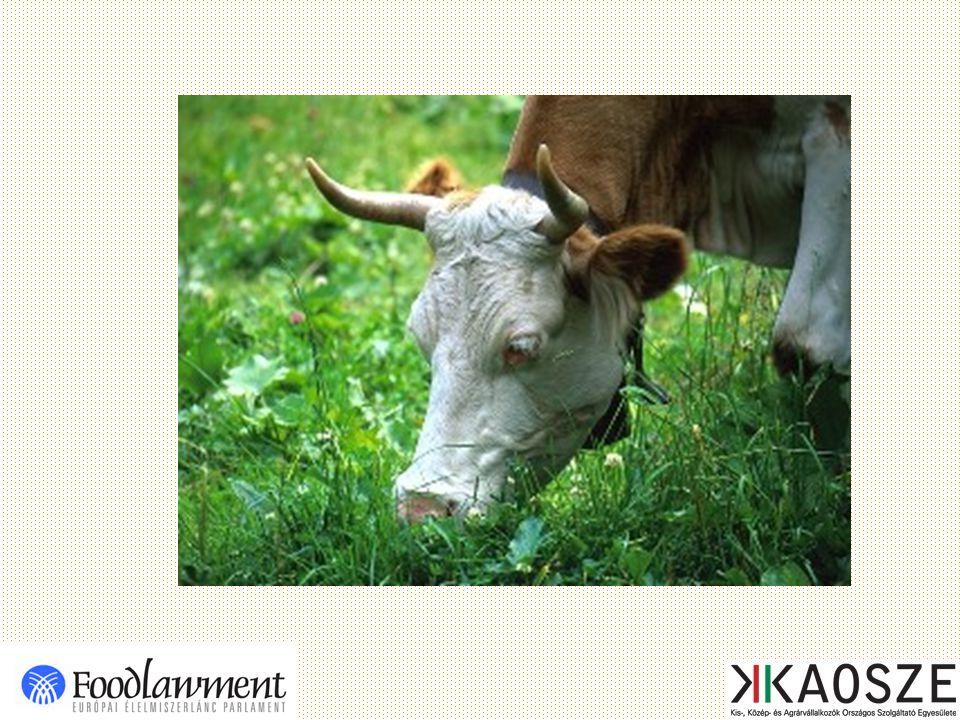 A közlegelők tragédiája Egy közlegelő – példánkban -, tíz tehenet tud eltartani, és így mindegyik tehén tíz liter tejet ad.