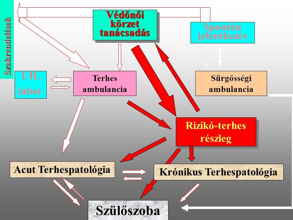 Védőnői körzet tanácsadás Terhes ambulancia UH, labor Sürgősségi ambulancia Acut Terhespatológia Krónikus Terhespatológia Szülőszoba Szakrendelések Sp