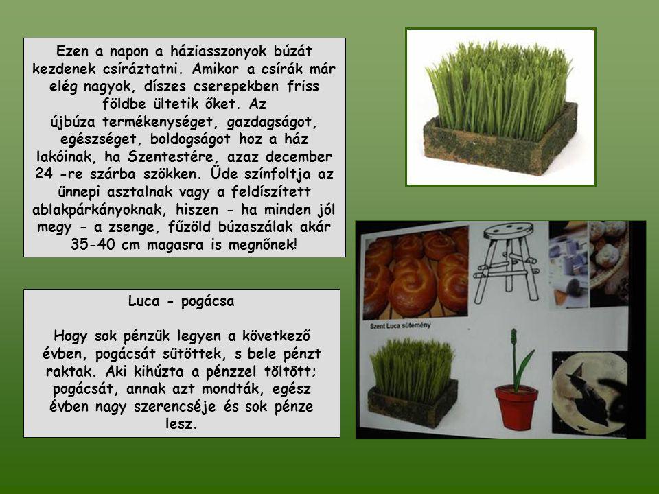. Luca napi búza: Ezen a napon a háziasszonyok búzát kezdenek csíráztatni. Amikor a csírák már elég nagyok, díszes cserepekben friss földbe ültetik ők