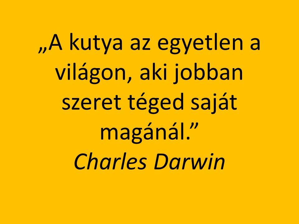 """""""A kutya az egyetlen a világon, aki jobban szeret téged saját magánál."""" Charles Darwin"""