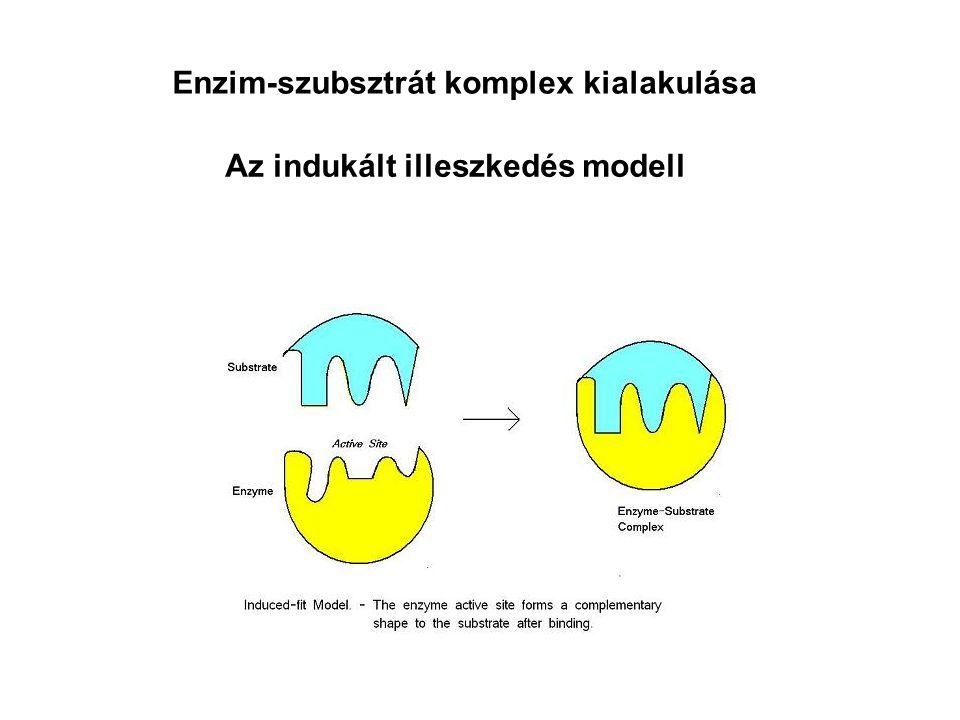 Az indukált illeszkedés modell