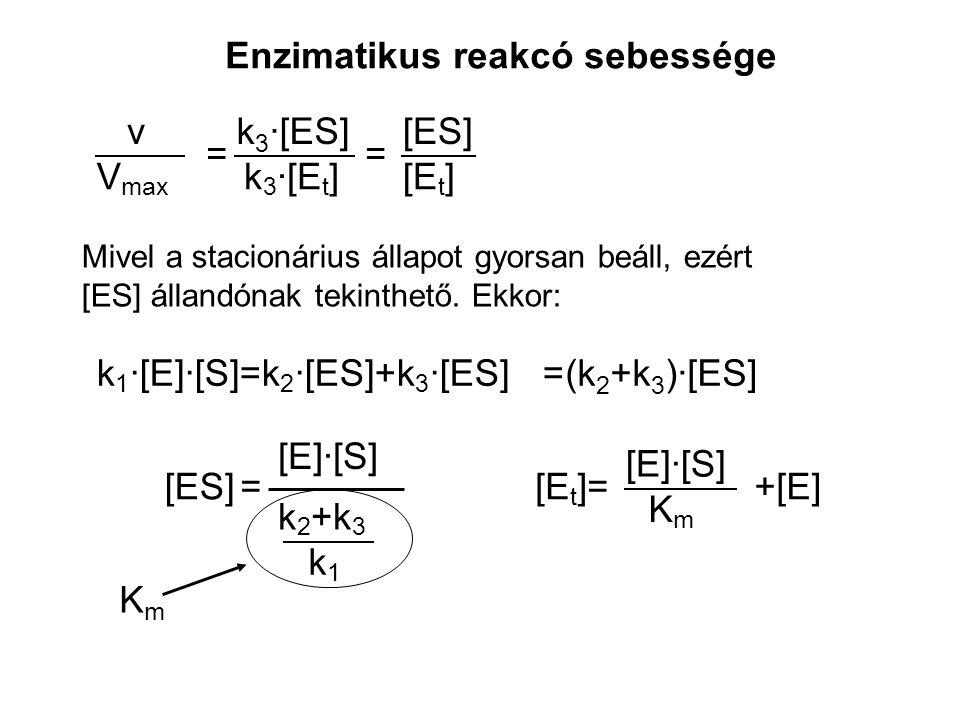 k 3 ·[ES] k 3 ·[E t ] [ES] [E t ] == V max v Mivel a stacionárius állapot gyorsan beáll, ezért [ES] állandónak tekinthető. Ekkor: =k 1 ·[E]·[S]=k 2 ·[