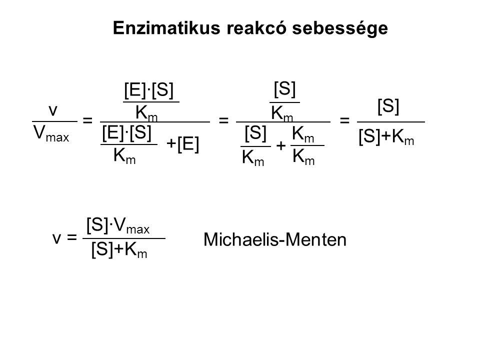 V max v = [E]·[S] KmKm +[E] [E]·[S] KmKm = [S] KmKm KmKm KmKm KmKm + [S]+K m [S] = [S]·V max v = Michaelis-Menten Enzimatikus reakcó sebessége [S]+K m