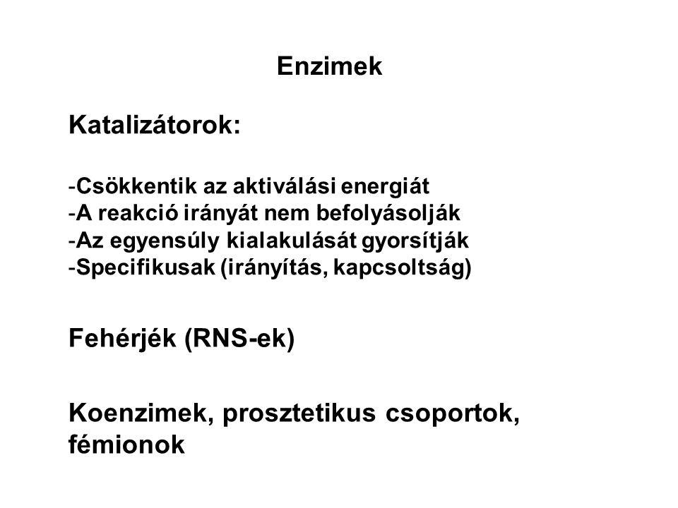 V max =k 3 ·[E t ] E+SESE+P k3k3 k2k2 k1k1 A reakciósebességeket a sebességi állandó és a koncentrációk szorzata adja: A+BAB k1k1 k2k2 v 1 =k 1 ·[A]·[B] v 2 =k 2 ·[AB] S→P reakció kezdetén: v=k 3 ·[ES] [E t ]=[E]+[ES] Nagyon magas szubsztátkoncentráció esetén az összes enzim használatban van.