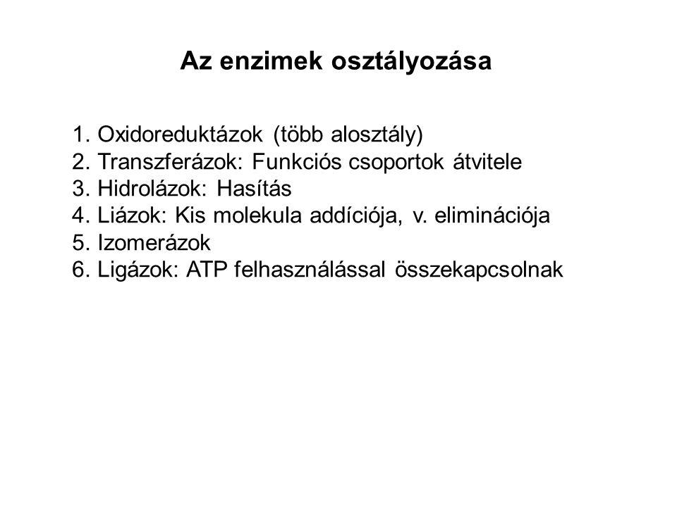 Az enzimek osztályozása 1.Oxidoreduktázok (több alosztály) 2.Transzferázok: Funkciós csoportok átvitele 3.Hidrolázok: Hasítás 4.Liázok: Kis molekula addíciója, v.