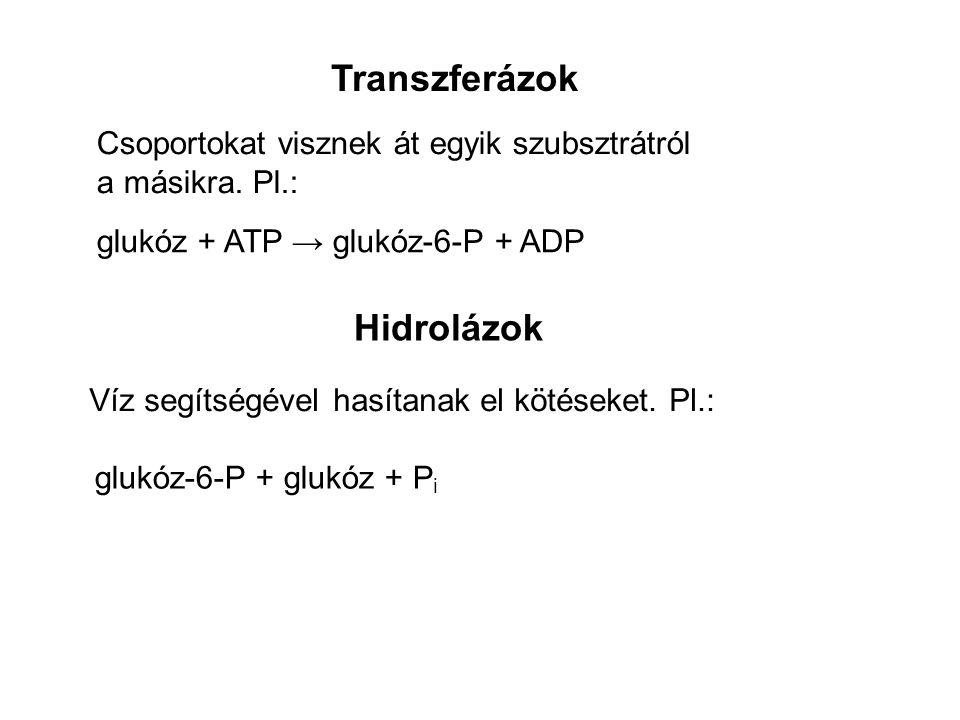 Transzferázok Csoportokat visznek át egyik szubsztrátról a másikra. Pl.: glukóz + ATP → glukóz-6-P + ADP Hidrolázok Víz segítségével hasítanak el köté