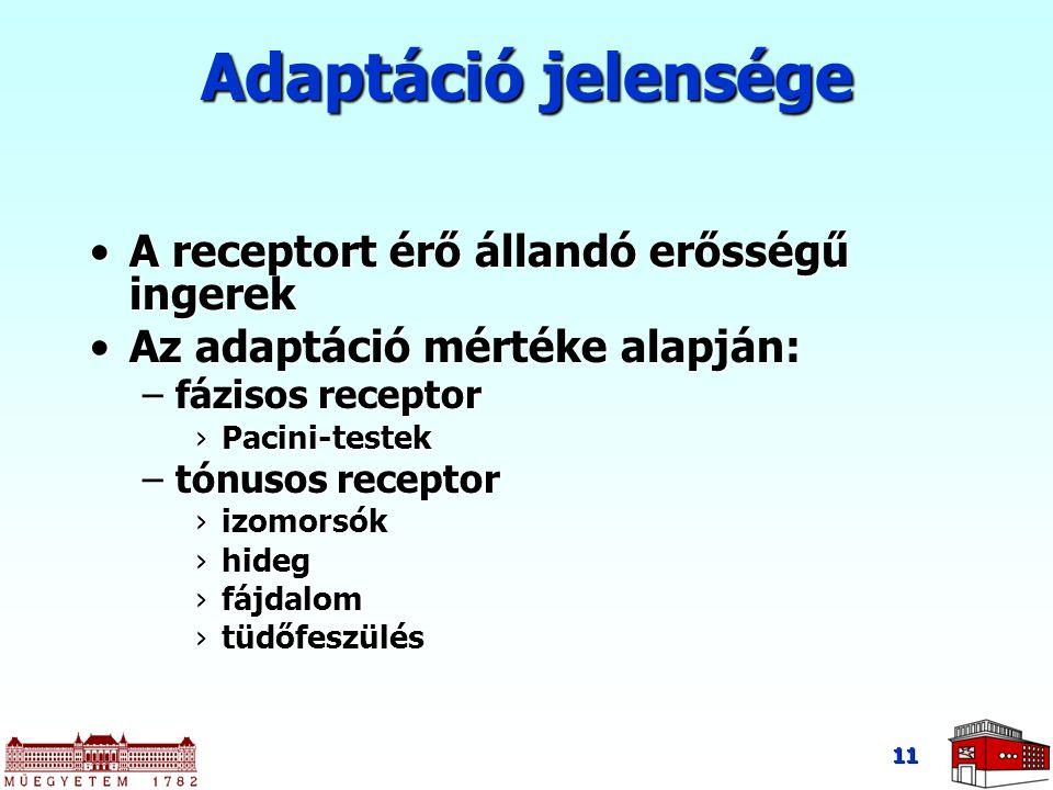 Adaptáció jelensége A receptort érő állandó erősségű ingerekA receptort érő állandó erősségű ingerek Az adaptáció mértéke alapján:Az adaptáció mértéke