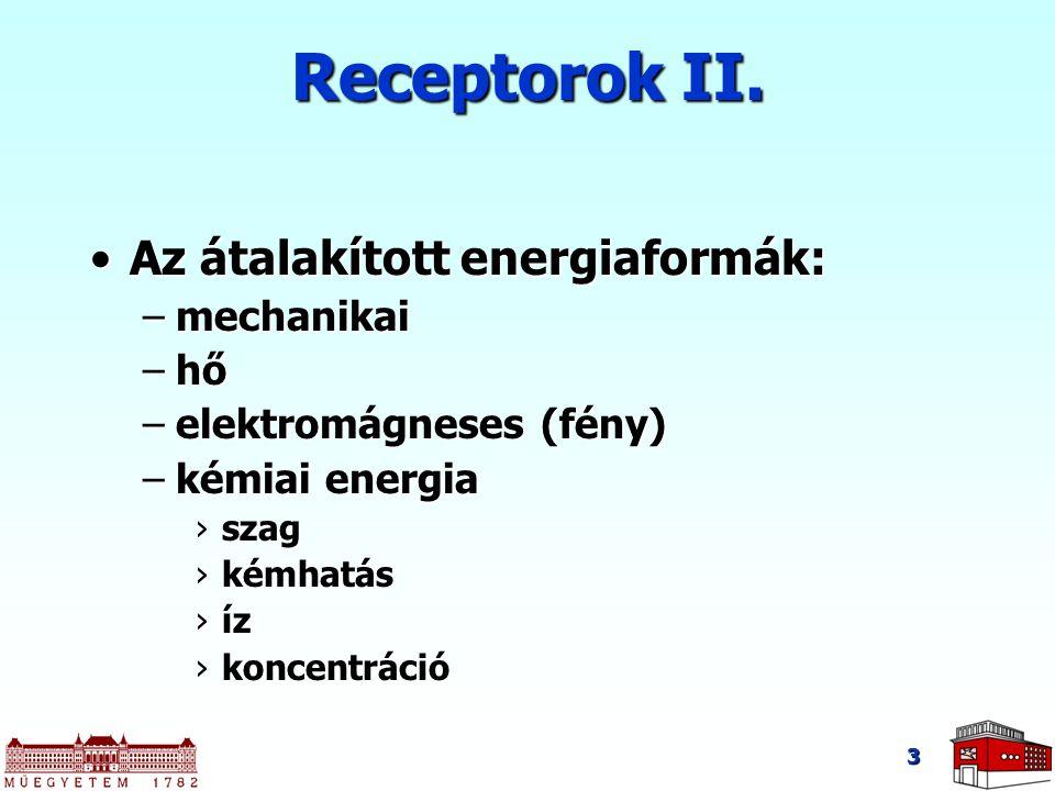 Receptorok II. Az átalakított energiaformák:Az átalakított energiaformák: –mechanikai –hő –elektromágneses (fény) –kémiai energia ›szag ›kémhatás ›íz