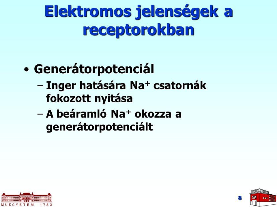 Elektromos jelenségek a receptorokban GenerátorpotenciálGenerátorpotenciál –Inger hatására Na + csatornák fokozott nyitása –A beáramló Na + okozza a g