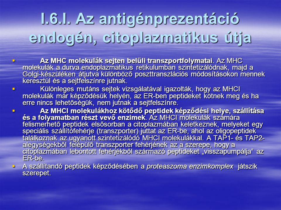 I.5. Az antigén bemutatásának folyamata  Az antigén bemutatása (prezentáció) az a folyamat, amelynek során a fehérjetermészetű antigének feldolgozásr