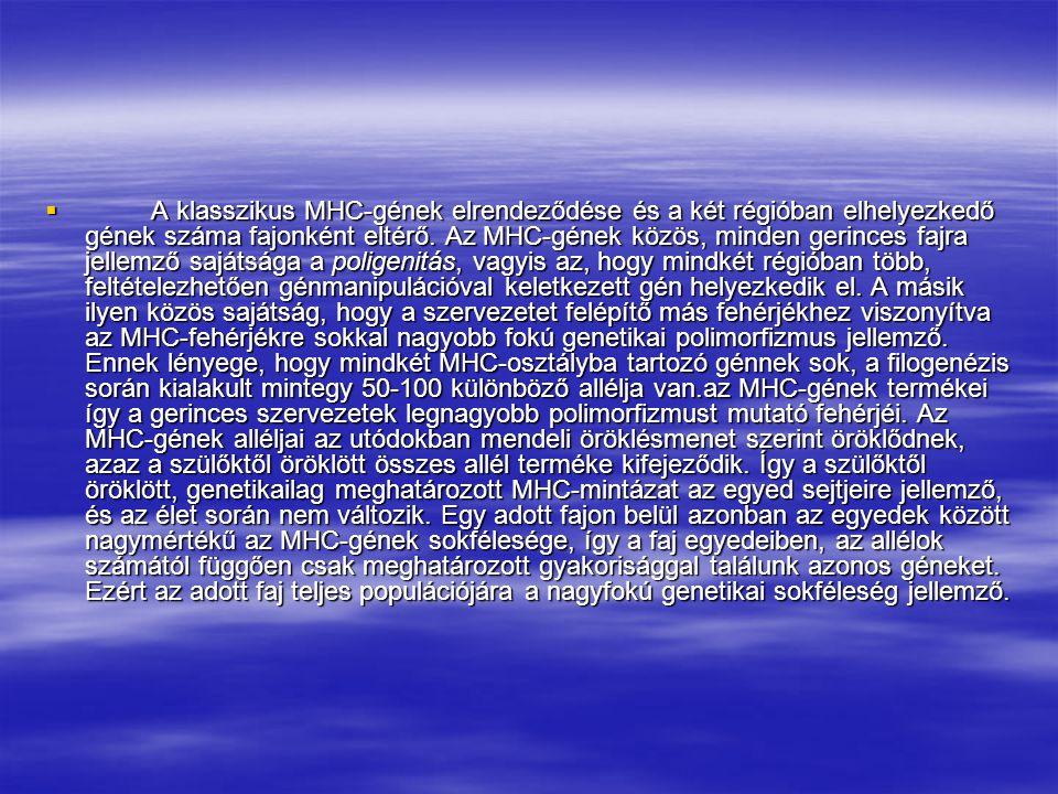 I.2. A fő hisztokompatibilitási génkomplex (MHC) termékei  A klasszikus MHC-géneknek két fő régióját, az MHCI és az MHCII osztályba tartozó géneket m