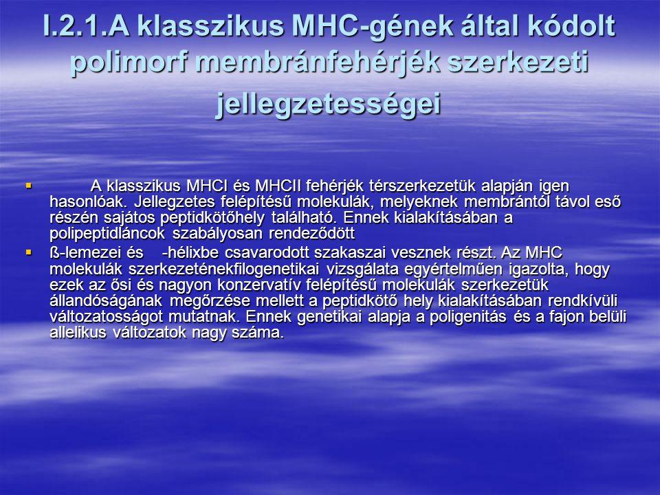 Az MHC felfedezése  Az MHC-géneket a szövet-, ill.