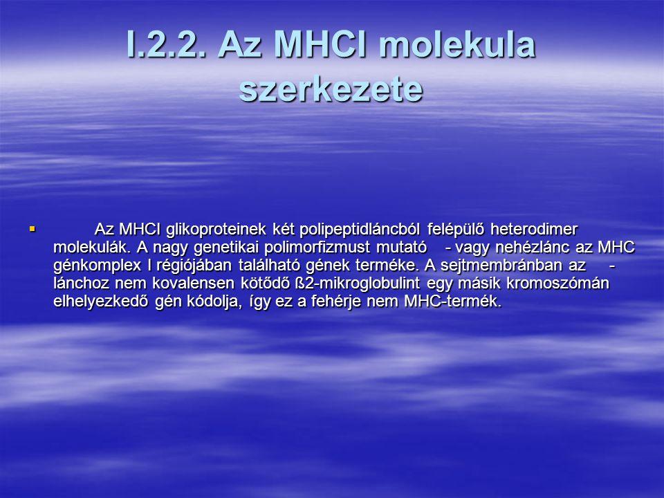 I.2.1.A klasszikus MHC-gének által kódolt polimorf membránfehérjék szerkezeti jellegzetességei  A klasszikus MHCI és MHCII fehérjék térszerkezetük alapján igen hasonlóak.