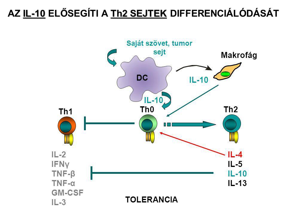 IL-10Th2 SEJTEK AZ IL-10 ELŐSEGÍTI A Th2 SEJTEK DIFFERENCIÁLÓDÁSÁT Th0 IL-10 Th1 IL-2 IFNγ TNF-β TNF-α GM-CSF IL-3 DC Saját szövet, tumor sejt IL-10 Makrofág Th2 IL-4 IL-5 IL-10 IL-13 TOLERANCIA