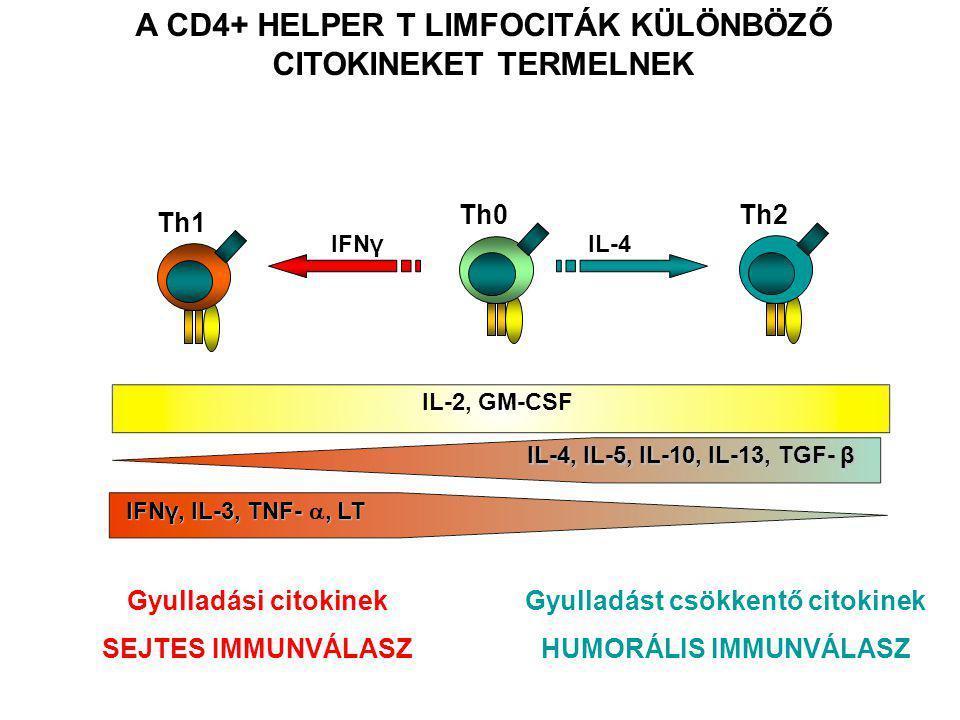 A CD4+ HELPER T LIMFOCITÁK KÜLÖNBÖZŐ CITOKINEKET TERMELNEK Gyulladási citokinek SEJTES IMMUNVÁLASZ Gyulladást csökkentő citokinek HUMORÁLIS IMMUNVÁLASZ IFNγ, IL-3, TNF-, LT IFNγ, IL-3, TNF- , LT Th1 IL-2, GM-CSF Th0 IL-4, IL-5, IL-10, IL-13, TGF- β Th2 IL-4IFNγ