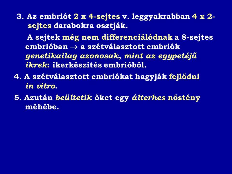 3.Az embriót 2 x 4-sejtes v. leggyakrabban 4 x 2- sejtes darabokra osztják.