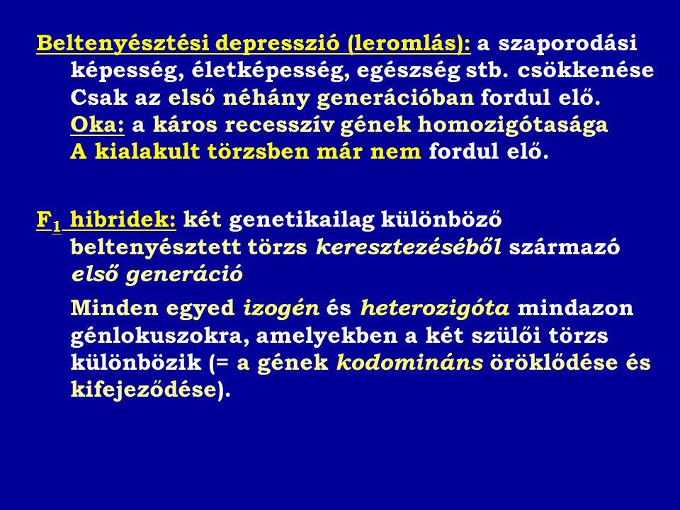 Beltenyésztési depresszió (leromlás): a szaporodási képesség, életképesség, egészség stb.