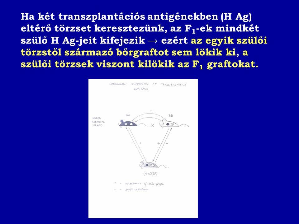 Ha két transzplantációs antigénekben (H Ag) eltérő törzset keresztezünk, az F 1 -ek mindkét szülő H Ag-jeit kifejezik → ezért az egyik szülői törzstől származó bőrgraftot sem lökik ki, a szülői törzsek viszont kilökik az F 1 graftokat.