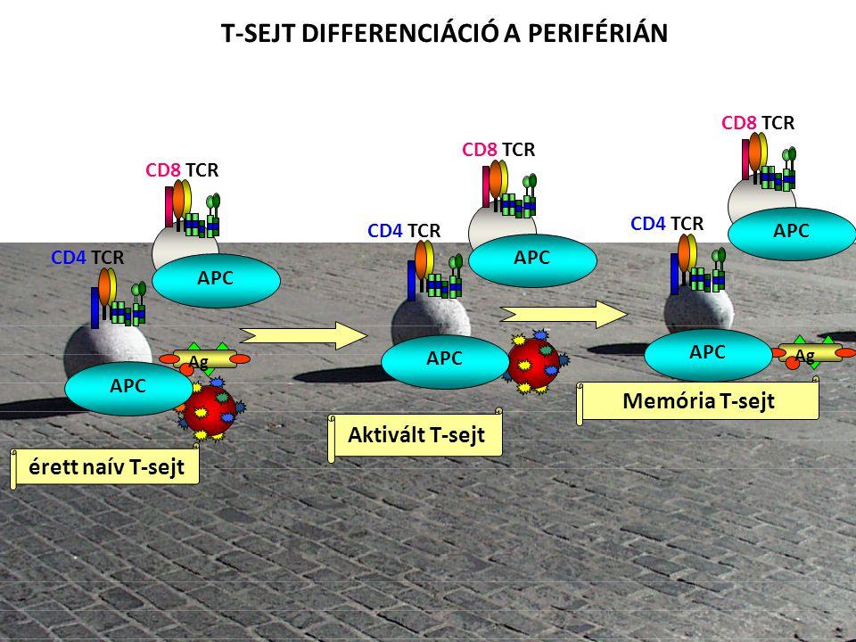 a a Aktivált T-sejt érett naív T-sejt Memória T-sejt T-SEJT DIFFERENCIÁCIÓ A PERIFÉRIÁN Ag CD4 TCR APC CD8 TCR APC CD4 TCR APC CD8 TCR APC CD4 TCR APC