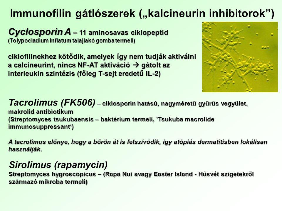 """Cyclosporin A – 11 aminosavas ciklopeptid (Tolypocladium inflatum talajlakó gomba termeli) ciklofilinekhez kötődik, amelyek így nem tudják aktiválni a calcineurint, nincs NF-AT aktiváció  gátolt az interleukin szintézis (főleg T-sejt eredetű IL-2) Immunofilin gátlószerek (""""kalcineurin inhibitorok ) – ciklosporin hatású, nagyméretű gyűrűs vegyület, makrolid antibiotikum (Streptomyces tsukubaensis – baktérium termeli, Tsukuba macrolide immunosuppressant') Tacrolimus (FK506) – ciklosporin hatású, nagyméretű gyűrűs vegyület, makrolid antibiotikum (Streptomyces tsukubaensis – baktérium termeli, Tsukuba macrolide immunosuppressant') A tacrolimus előnye, hogy a bőrön át is felszívódik, így atópiás dermatitisben lokálisan használják."""