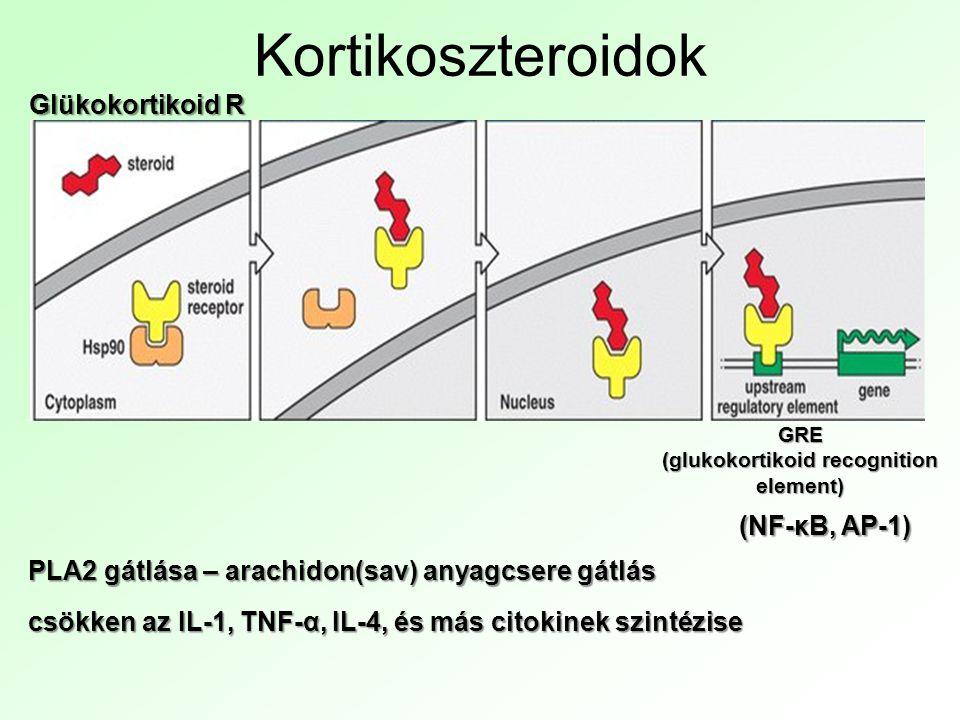 Kortikoszteroidok Glükokortikoid R GRE (glukokortikoid recognition element) (NF-κB, AP-1) PLA2 gátlása – arachidon(sav) anyagcsere gátlás csökken az IL-1, TNF-α, IL-4, és más citokinek szintézise