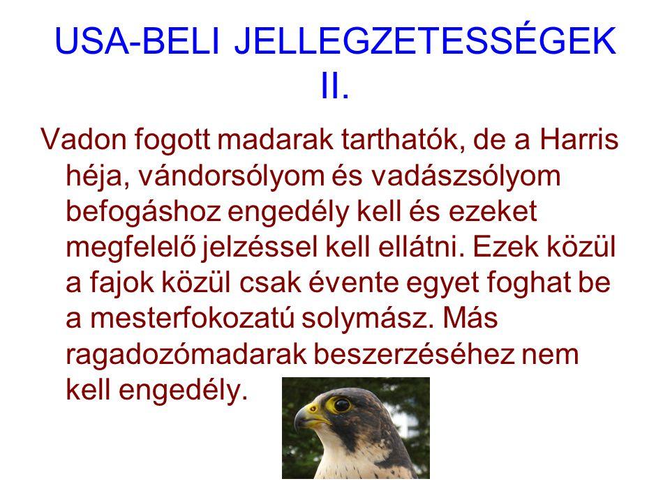 USA-BELI JELLEGZETESSÉGEK II.