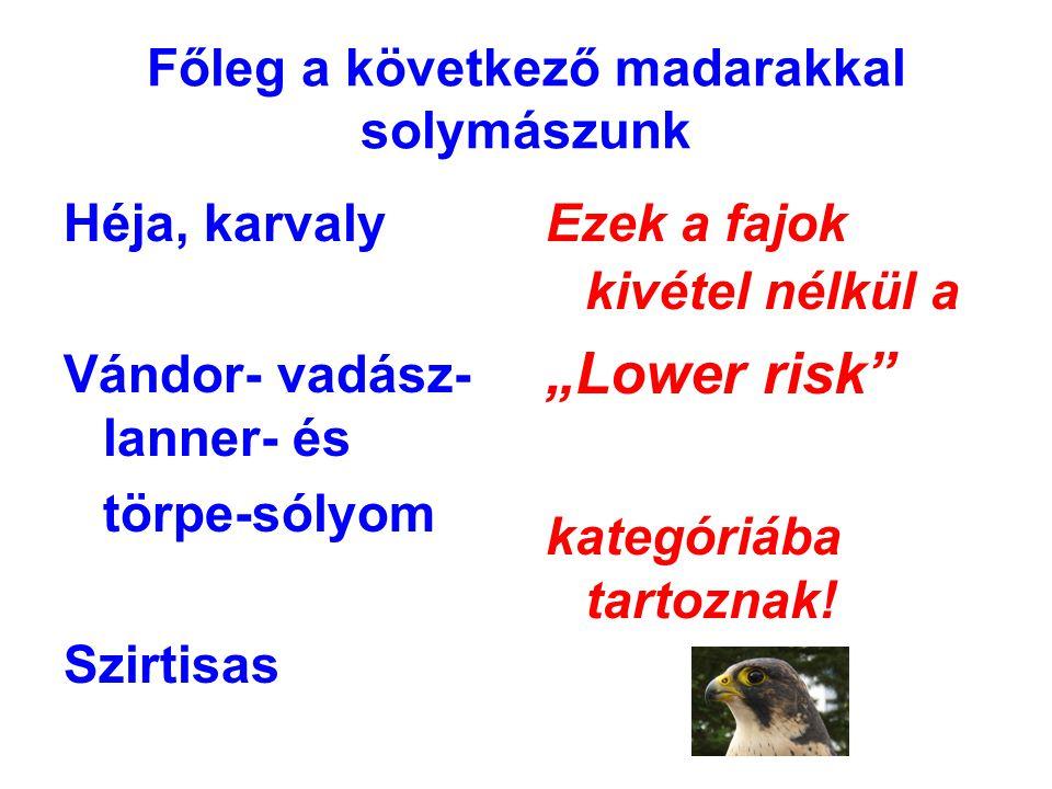 """Főleg a következő madarakkal solymászunk Héja, karvaly Vándor- vadász- lanner- és törpe-sólyom Szirtisas Ezek a fajok kivétel nélkül a """"Lower risk"""" ka"""