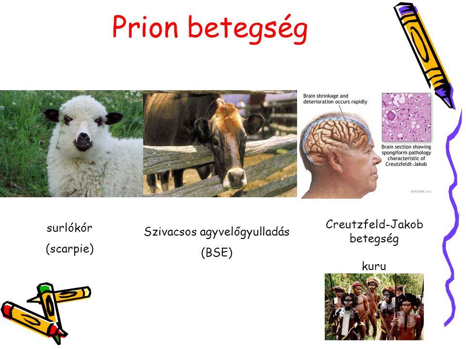 Prion betegség Creutzfeld-Jakob betegség kuru surlókór (scarpie) Szivacsos agyvelőgyulladás (BSE)