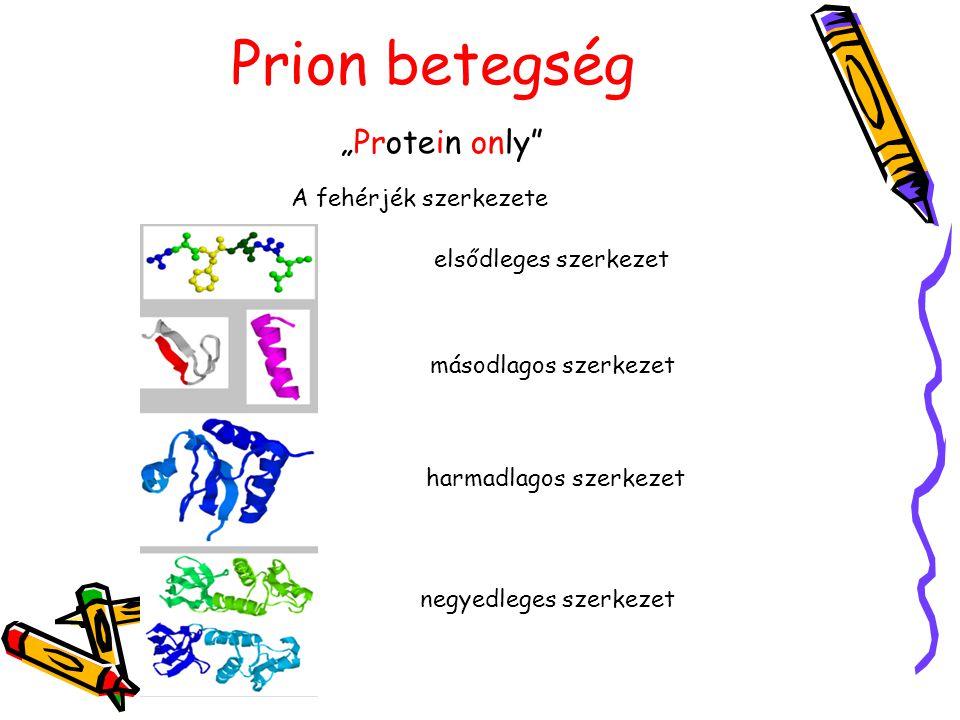 """Prion betegség A fehérjék szerkezete """"Protein only elsődleges szerkezet másodlagos szerkezet harmadlagos szerkezet negyedleges szerkezet"""